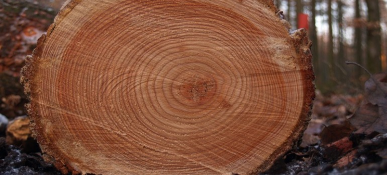 прочная древесина